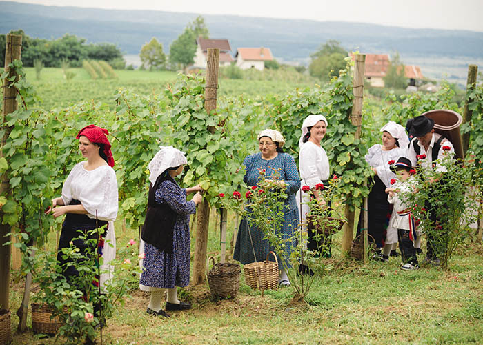 TOP 5 preporuka zbog kojih ćete poželjeti provesti ljeto u Požeško-slavonskoj županiji