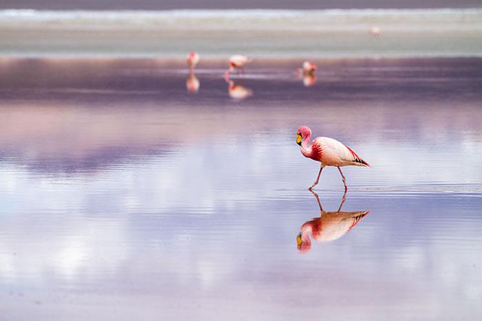 Salar de Uyuni: Nestvaran krajolik gdje se spajaju nebo i zemlja