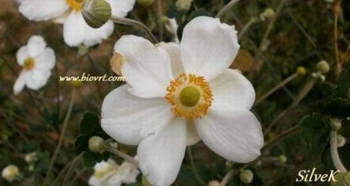 Cvijeće koje nagovještava jesen