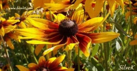 Zadnji pogled na vrtlarsku 2011. godinu