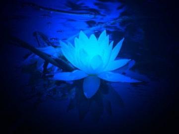 Aromaterapija - kemija ili ezoterija?