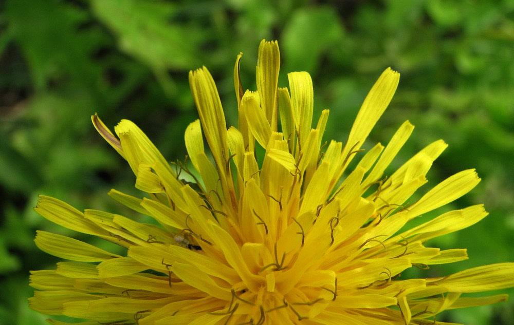 Proljetna detoksikacija uz fitoterapiju