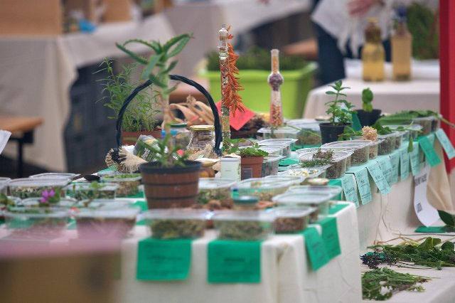 04.06.2011. Festival samoniklog bilja i zdravog života