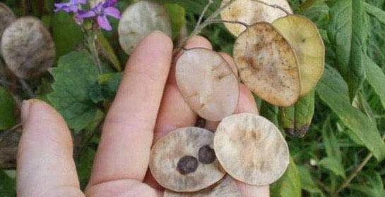 Sjeme – kraj i početak života biljaka