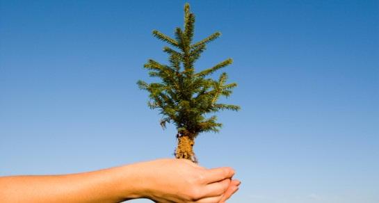 Neka vaši božićni ukrasi budu živi