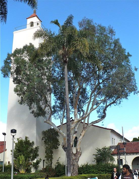 Tamo gdje palme njišu grane