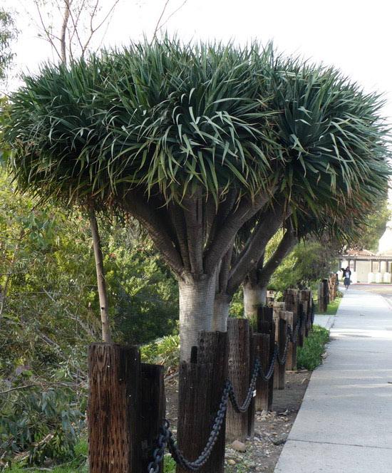 Skitanje u sjeni palmi